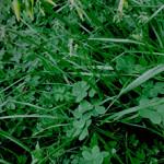 Cos'è l'erba