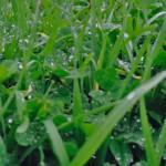 L'erba crescendo cambia