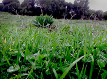 Paesaggio_2_rid